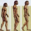 l'Homme évolution du corps
